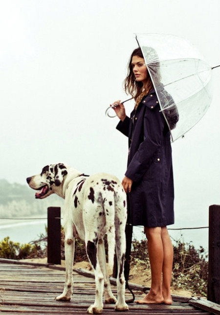 great dane rain